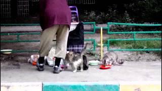 Как бабушки кормят бездомных кошек