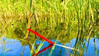 Рыбалка на поплавок НА КРАСИВОЙ РЕКЕ ловля карася