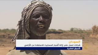 إزالة أشجار المسكيت شرقي السودان