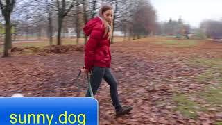 Внимание собаки - через прикосновения Урок 2