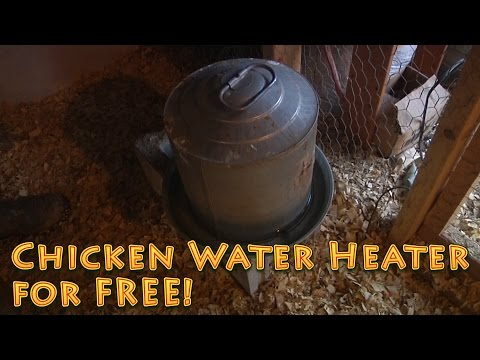 Chicken Water Heater