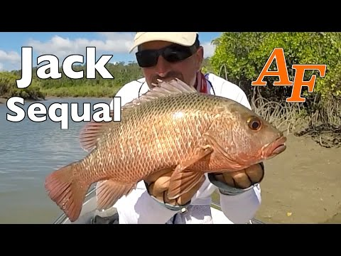 Mangrove Jack re-match Pt1 Andy's Fish Video EP