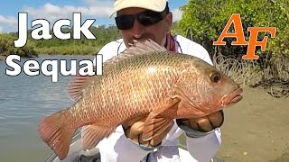 Mangrove Jack re-match Pt1 Andy's Fish Video EP.307