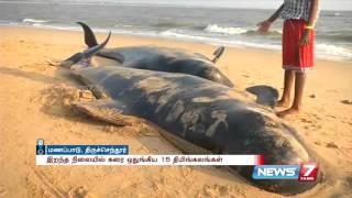 15 dead whales wash ashore at Thiruchendur | News7 Tamil
