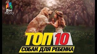 Топ 10 пород собак для ребенка\Top 10 dog breeds for a child
