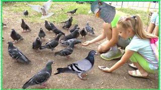 Как ловить руками голубей ЧЕЛЛЕНДЖ + Кормим птиц из рук + ДЕТСКОЕ ВИДЕО ВЛОГ УФА(Как ловить руками голубей ЧЕЛЛЕНДЖ + Кормим птиц из рук + ДЕТСКОЕ ВИДЕО ВЛОГ УФА ஜ════════ஜ۩ Семейные..., 2016-07-10T14:32:30.000Z)