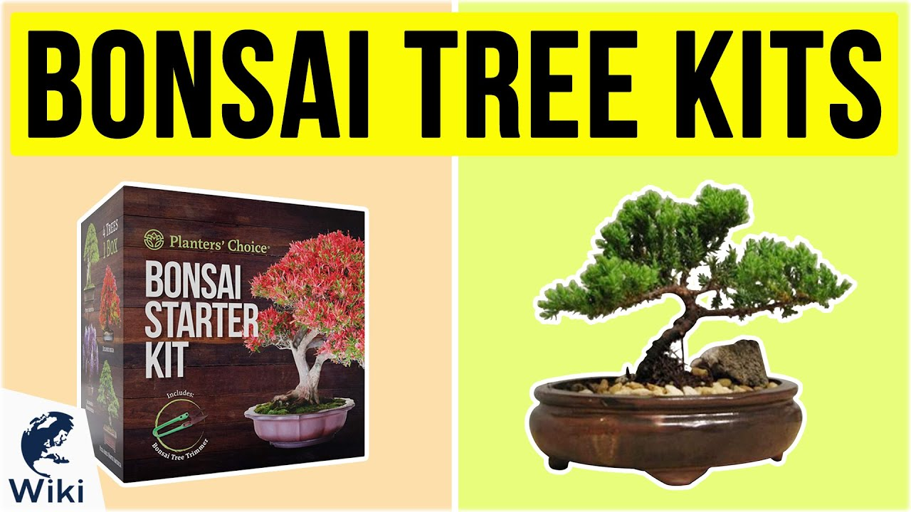 10 Best Bonsai Tree Kits 2020 Youtube