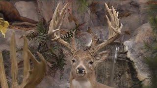 Sales up at outdoors stores ahead of gun hunting season   TODAY'S TMJ4