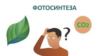 Въглероден диоксид и кислород в аквариума. Процесът фотосинтеза.