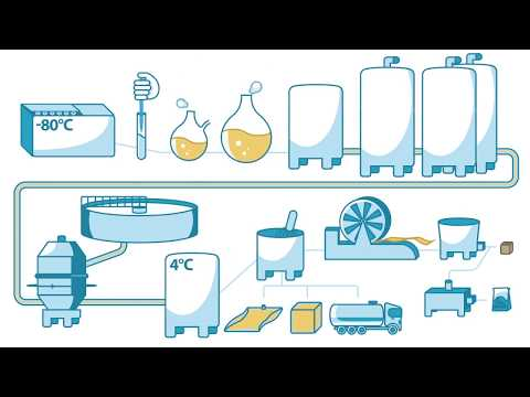 How Yeast Is Made - Lesaffre