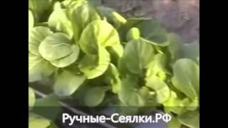 Ручная сеялка Басси(http://xn----itbbmjfkxmq8bxc2c.xn--p1ai/ http://sejalki.ru Овощные сеялки пневматические, механические, ручные, самоходные: СР-1,..., 2015-03-09T01:00:41.000Z)