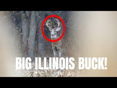 BUCK DOWN!!! | Illinois Deer Hunting 2019!
