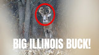 BUCK DOWN!!!   Illinois Deer Hunting 2019!