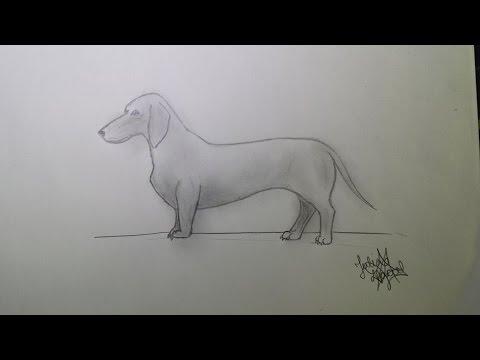 Como Desenhar Um Cachorro Modo Fácil How To Draw A Dog Easy Mode Julia Maciel