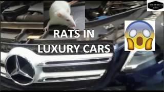 RATS IN LUXURY CAR | LUXURY CAR IN INDIA |
