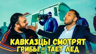 РЕАКЦИЯ КАВКАЗЦЕВ НА ГРИБЫ - ТАЕТ ЛЕД
