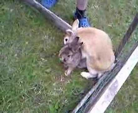 Rabbit Gay 6