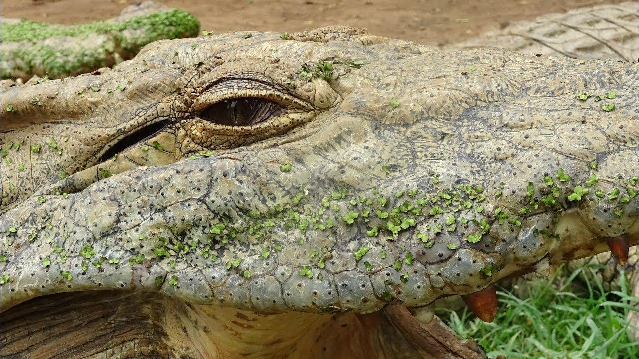 Crocodile Creek - czy krokodyl może być smaczny?