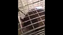 Rodent Removal Services Arlington TX | 817.431.3007