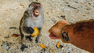 PLAYING WITH  WILD MONKEYS! (Bad Idea)