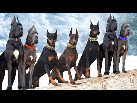 These Are 10 Most Majestic Dog Breeds