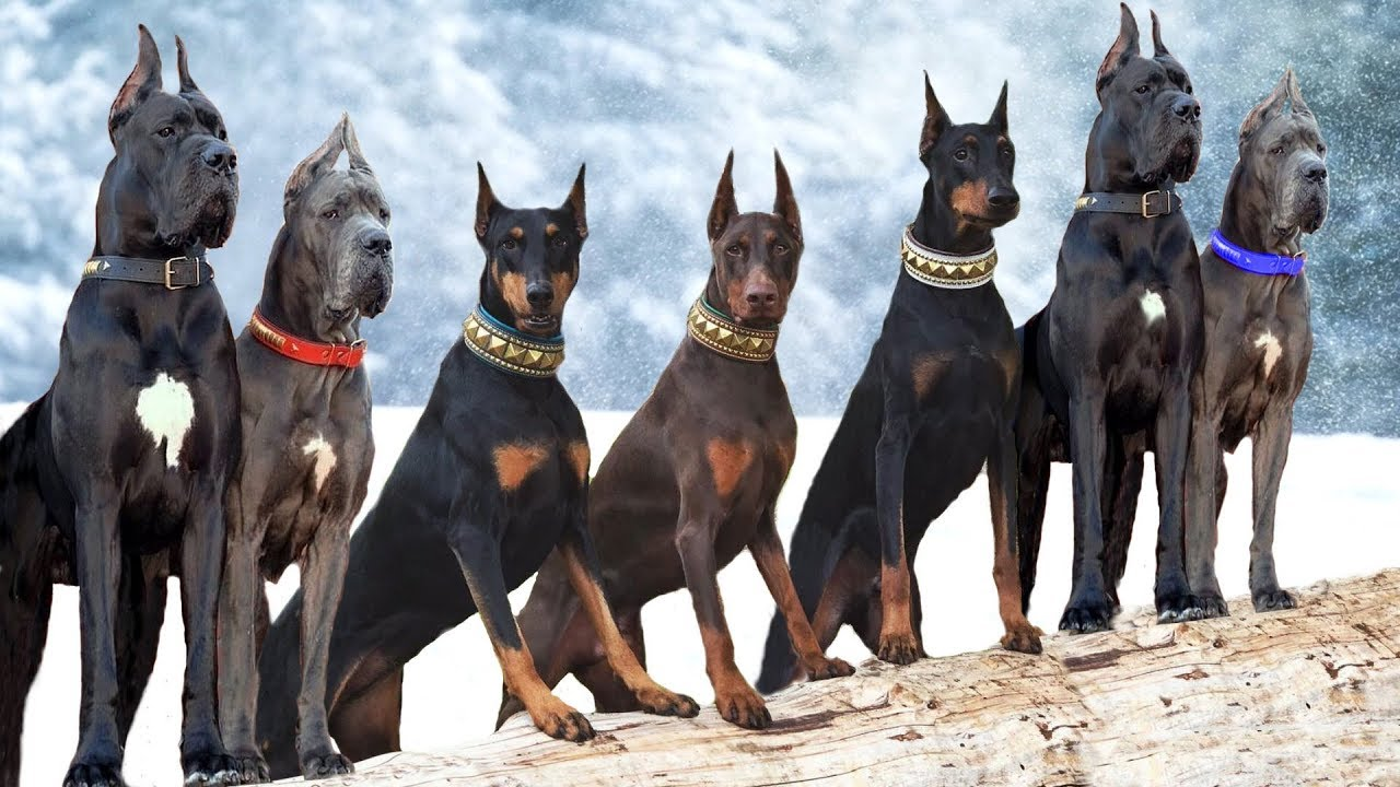 These Are 10 Most Majestic Dog Breeds - YouTube