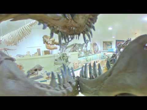 Black Hills Institute of Geological Research 360 Tour