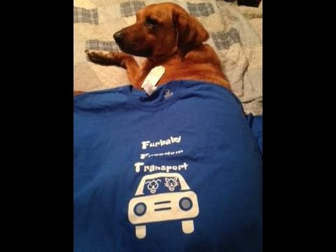 Furbaby Freedom Transport 1 year of Transports!