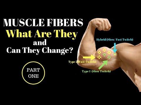 Muscle Fiber TYPES Explained: Part 1