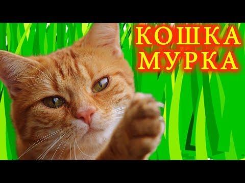 Mister Max с Miss Katy в ШОКЕ ищут кошку Мурку / Мистер Макс и Мисс Кэти by Étoile Tube