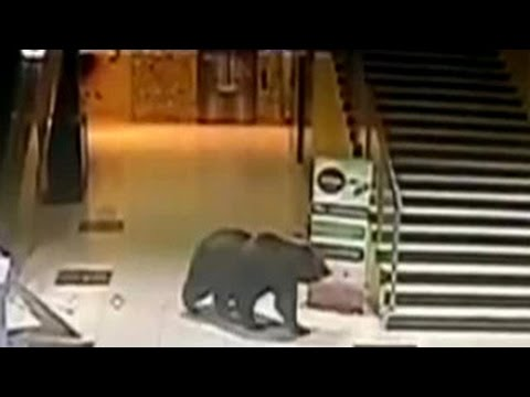 Медведь устроил погром в торговом центре Хабаровска и ворвался в детский сад