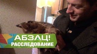 В Украине бум на экзотических животных - Абзац! - 15.11.2016