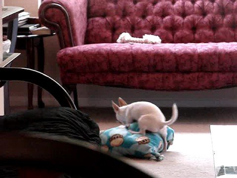 How do you hump a pillow