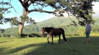 Dans med hestene