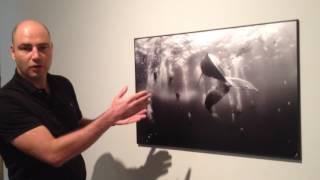"Anuar Patjane Floriuk con la imagen ""Whale Whisperers"""