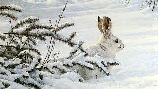 Охота на зайца беляка! /Hunt for hare !