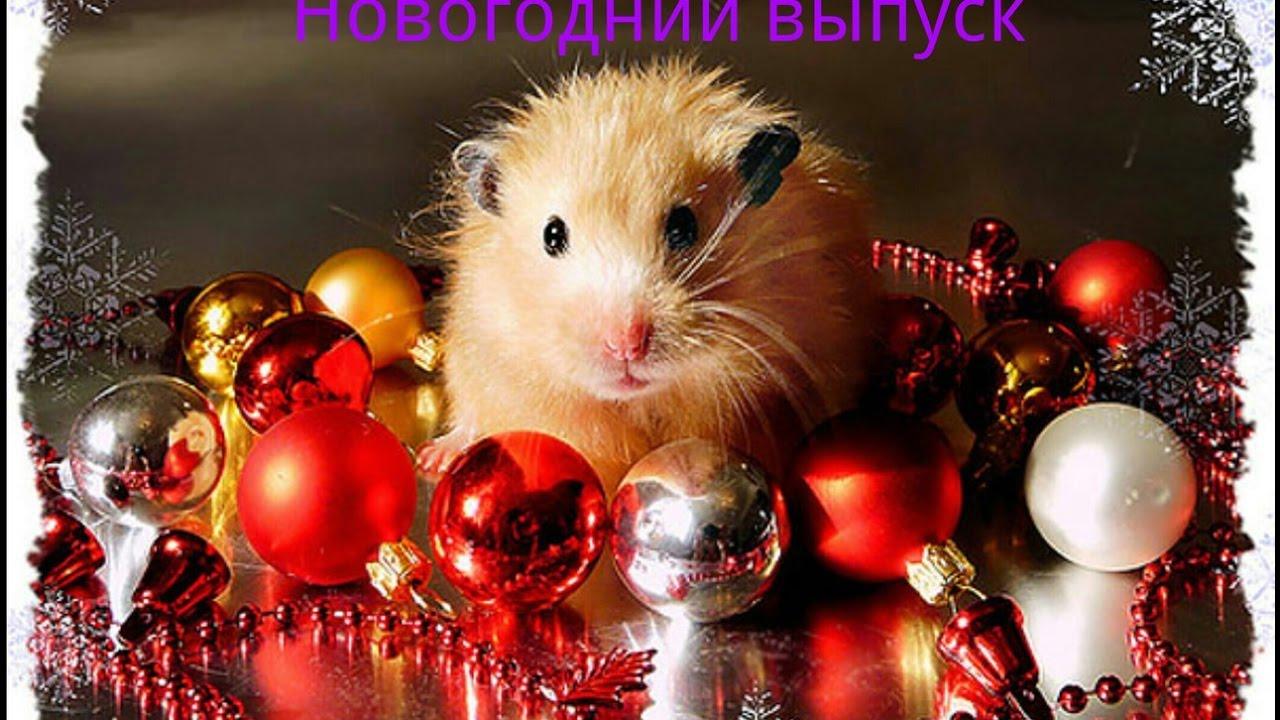 новогодние открытки хомяки внешне привлекательный, достойной