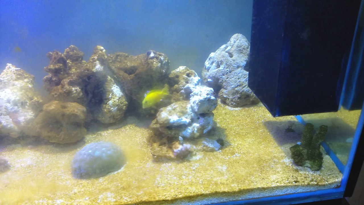 how to get rid of diatoms in saltwater tank