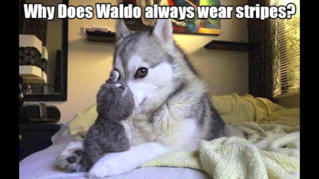 Funny Husky Jokes Meme : Husky joke meme pixshark images galleries with