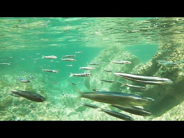 【釣りYoutuberの2泊3日間#2】この小魚の群れと共に「とんでもない事」が始まった