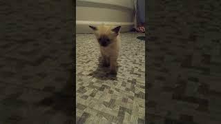 Котята бесятся