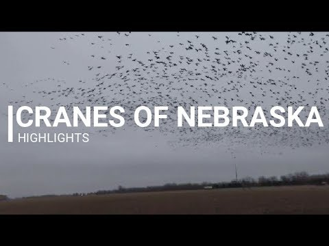 Cranes of Nebraska | Over 500,000 Cranes | TBM