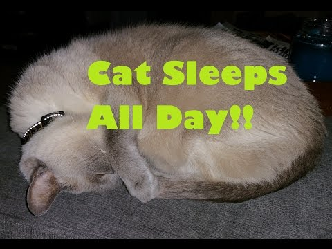 Time Lapse of Cat Sleeping All Day!
