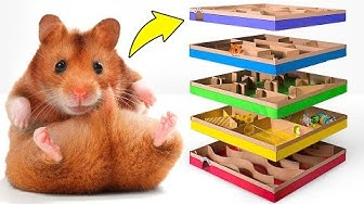 Super tolles 5-Level-DIY-Labyrinth für aktive Hamster 🐹