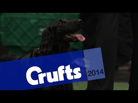 Agility | Crufts Large Novice and Medium ABC | Crufts 2014