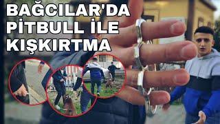 BAĞCILAR'DA PİTBULL İLE KIŞKIRTMA!