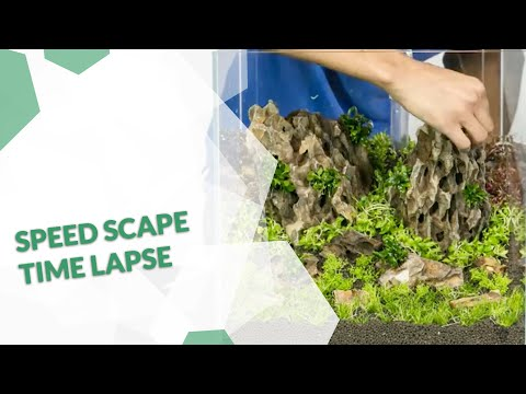 Timelapse Video Aquascaping  Aquarium set up