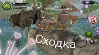 Wild Animals Online#Сходка*Квесты