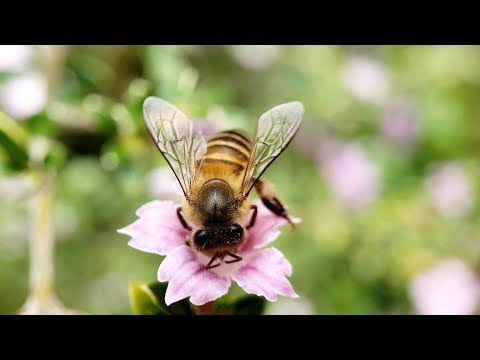 When our Samsung Galaxy S9+ (or S9) 2.8X HD Macro Lens found this HoneyBee
