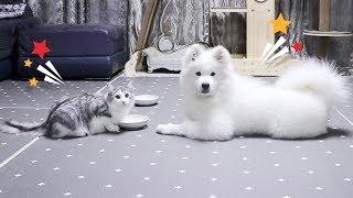 강아지와 고양이가 이렇게 착해도 되는건가요? ♥ 감동